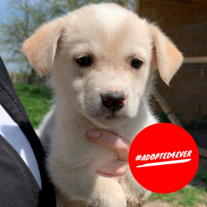 Lars (m, ca. 1,5 Monate) #adopted4ever