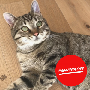 Peppi (m, ca. 9 Monate) #adopted4ever