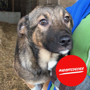 Gisele (w, ca. 3 Monate) #adopted4ever