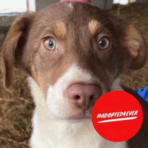 Suzie (w, ca. 3 Monate) #adopted4ever