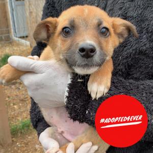 Benni (m, ca. 2,5 Monate) #adopted4ever
