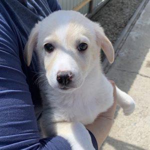 Poppy (w, ca. 2,5 Monate)