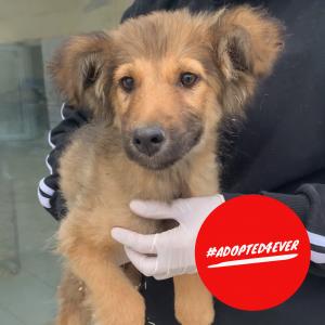 Alessio (m, ca. 4 Monate) #adopted4ever