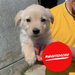 Prosecco (m, ca. 1,5 Monate) #adopted4ever
