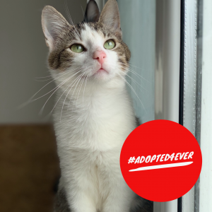 Karl (m, ca. 8 Monate) #adopted4ever
