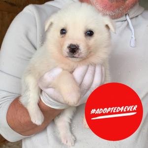 Skye (w, ca. 1,5 Monate) #adopted4ever