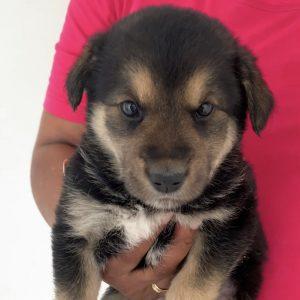 Bobby (m, ca. 1,5 Monate) #adopted4ever