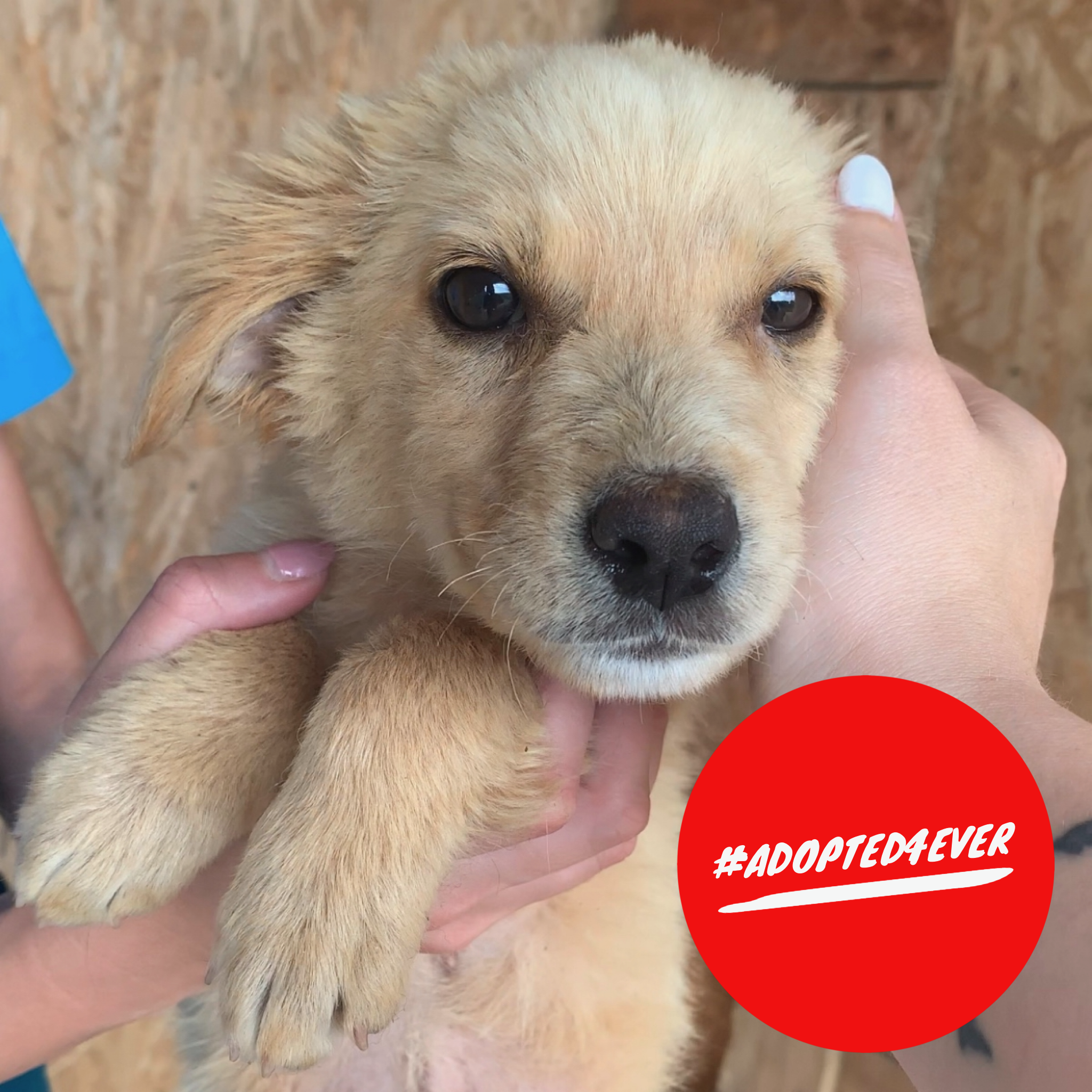 Chantal (w, ca. 3 Monate) #adopted4ever