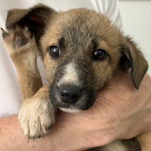 Lionel (m, ca. 2,5 Monate) #adopted4ever