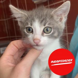 Caruso (m, ca. 3 Monate) #adopted4ever