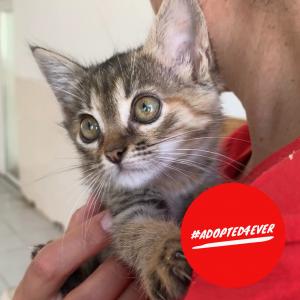 Peaches (w, ca. 2 Monate) #adopted4ever