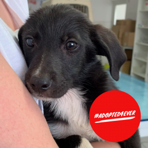 Mats (m, ca. 2,5 Monate) #adopted4ever