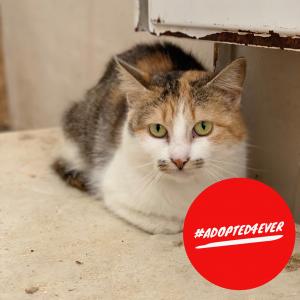 Tina (w, ca. 4 Jahre) #adopted4ever