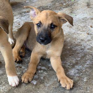 Becks (m, ca. 2,5 Monate) #adopted4ever