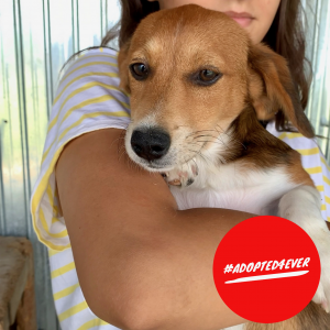 Rosemary (w, ca. 3 Monate) #adopted4ever