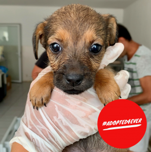 Nutmeg (w, ca. 1,5 Monate) #adopted4ever
