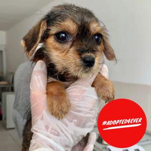 Naomi (w, ca. 1,5 Monate) #adopted4ever