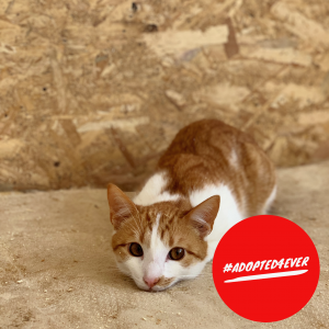 Pablo (m, ca. 11 Monate) #adopted4ever