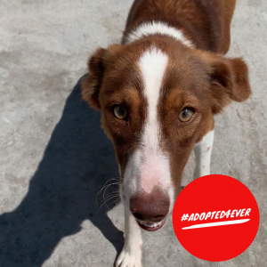 Lana (w, ca. 7 Monate) #adopted4ever