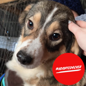 Shya (w, ca. 1,5 – 2 Jahre) #adopted4ever