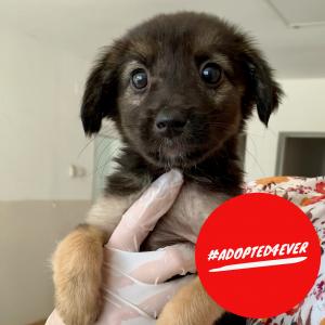 Paula (w, 2,5 Monate) #adopted4ever