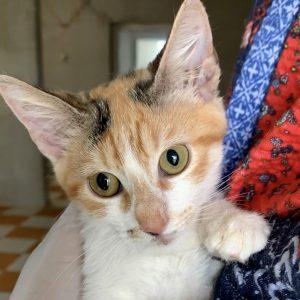 Erna (w, ca. 4 Monate)