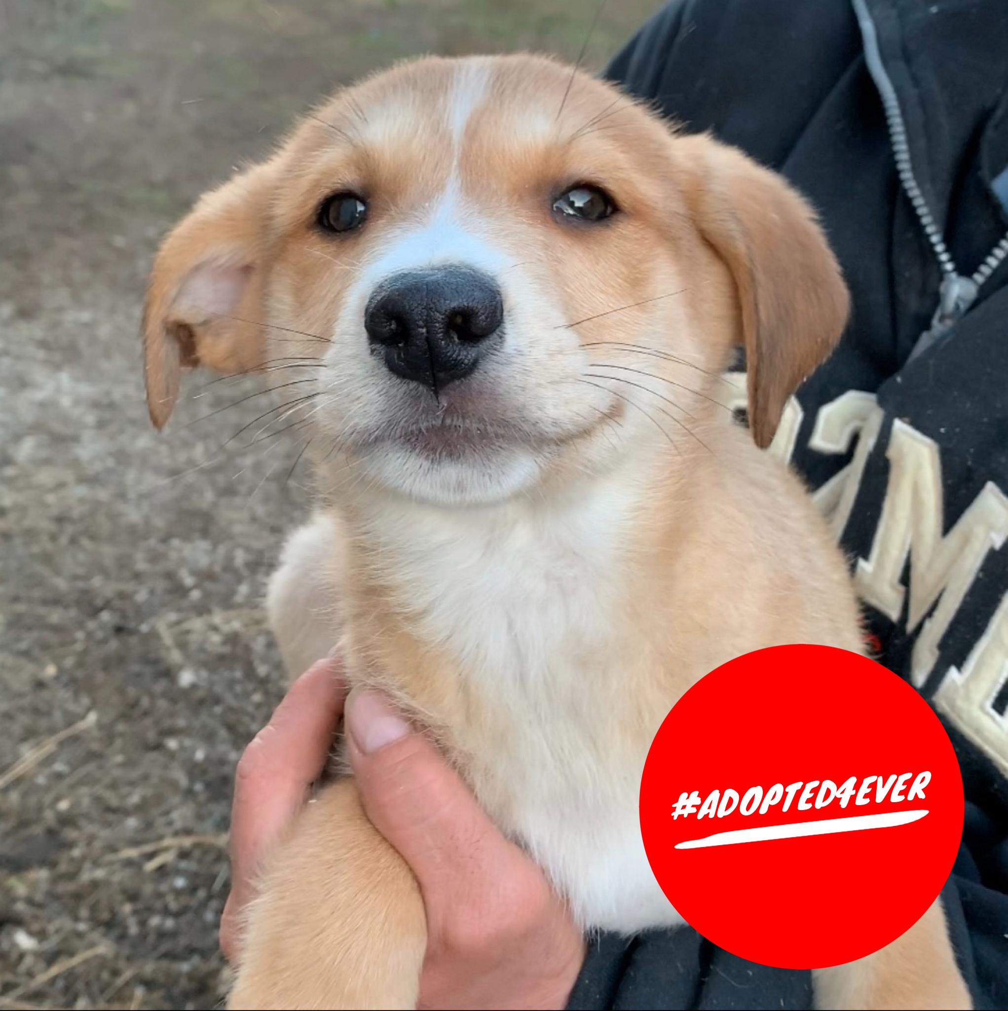 Django (m, geb. ca. 09/2019) #adopted4ever