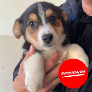 Chupa (w, geb. ca. 10/2019) #adopted4ever