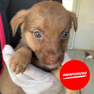 Bean (w, geb. ca. 11/2019) #adopted4ever