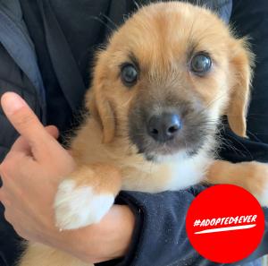 Gimli (m, geb. ca. 10/2019) #adopted4ever