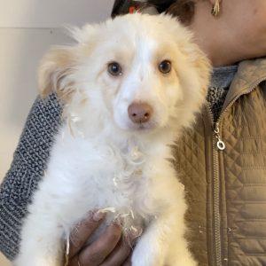 Nymeria (w, geb. ca. 10/2019) #adopted4ever