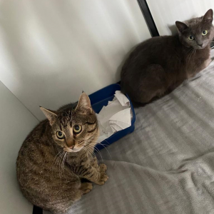 Read more about the article Bibi & Tina (w, geb. ca. 04/2019)